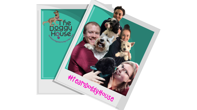 https://thedoggyhouse.co.uk/wp-content/uploads/2020/07/TeamDoggyHouse.png